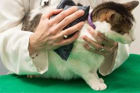 termoterapie-caini-cai-pisici